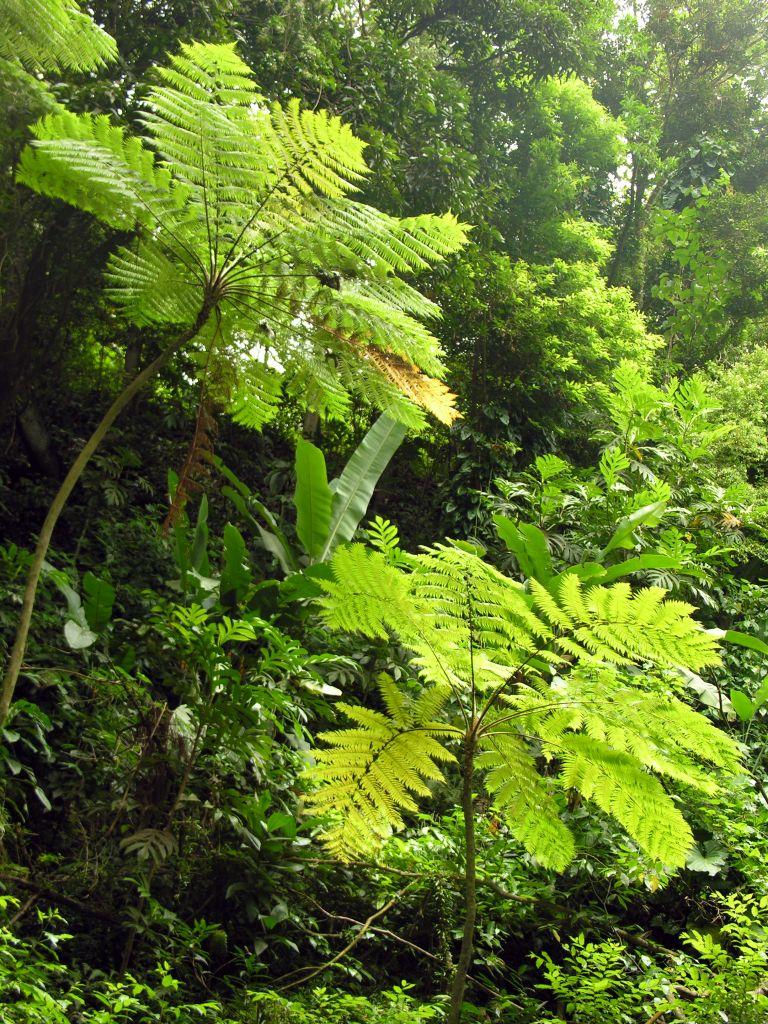 Montserrat - Rainforest © Stewart McPherson